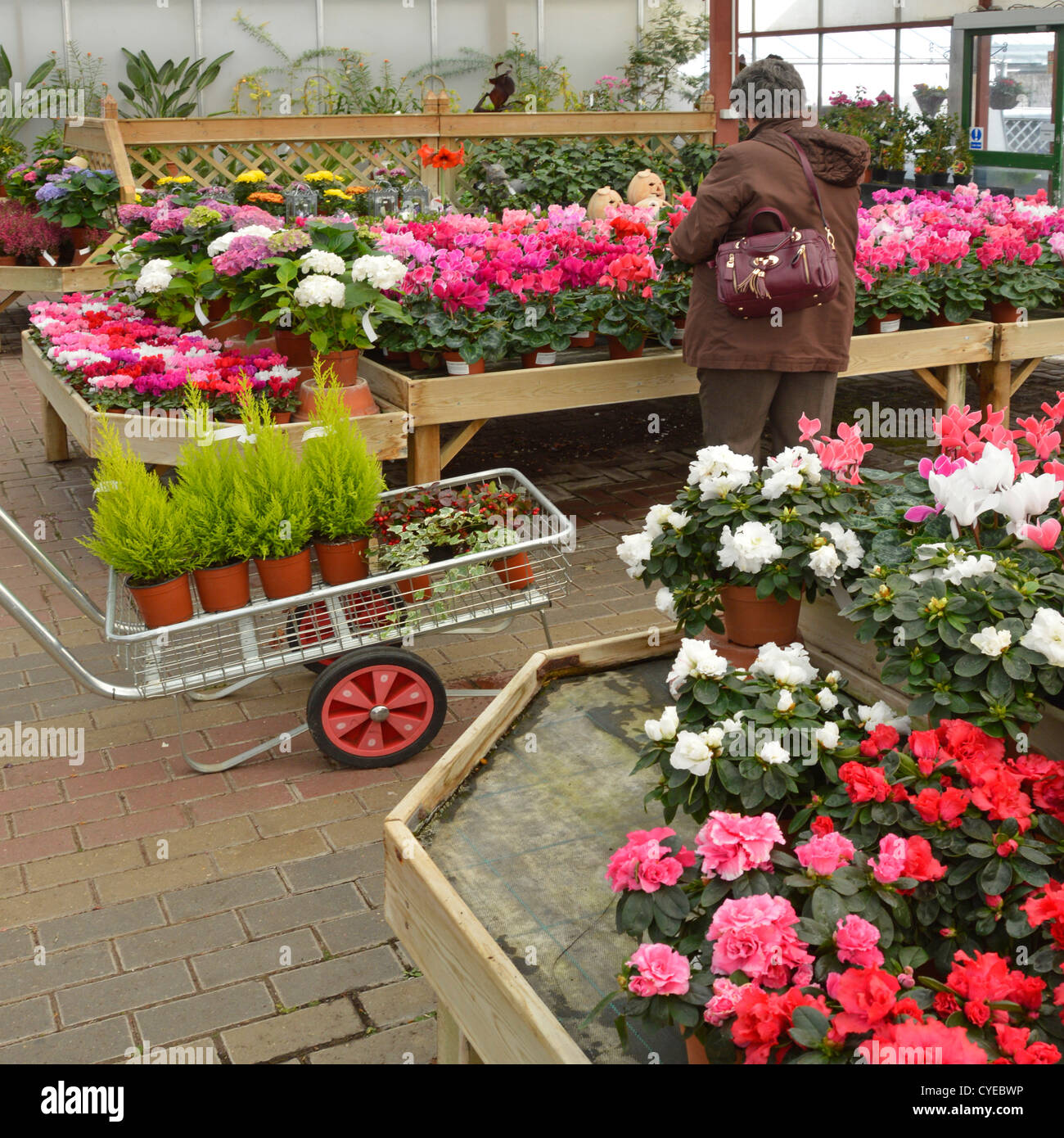 Woman shopping for plants at garden center - Stock Image