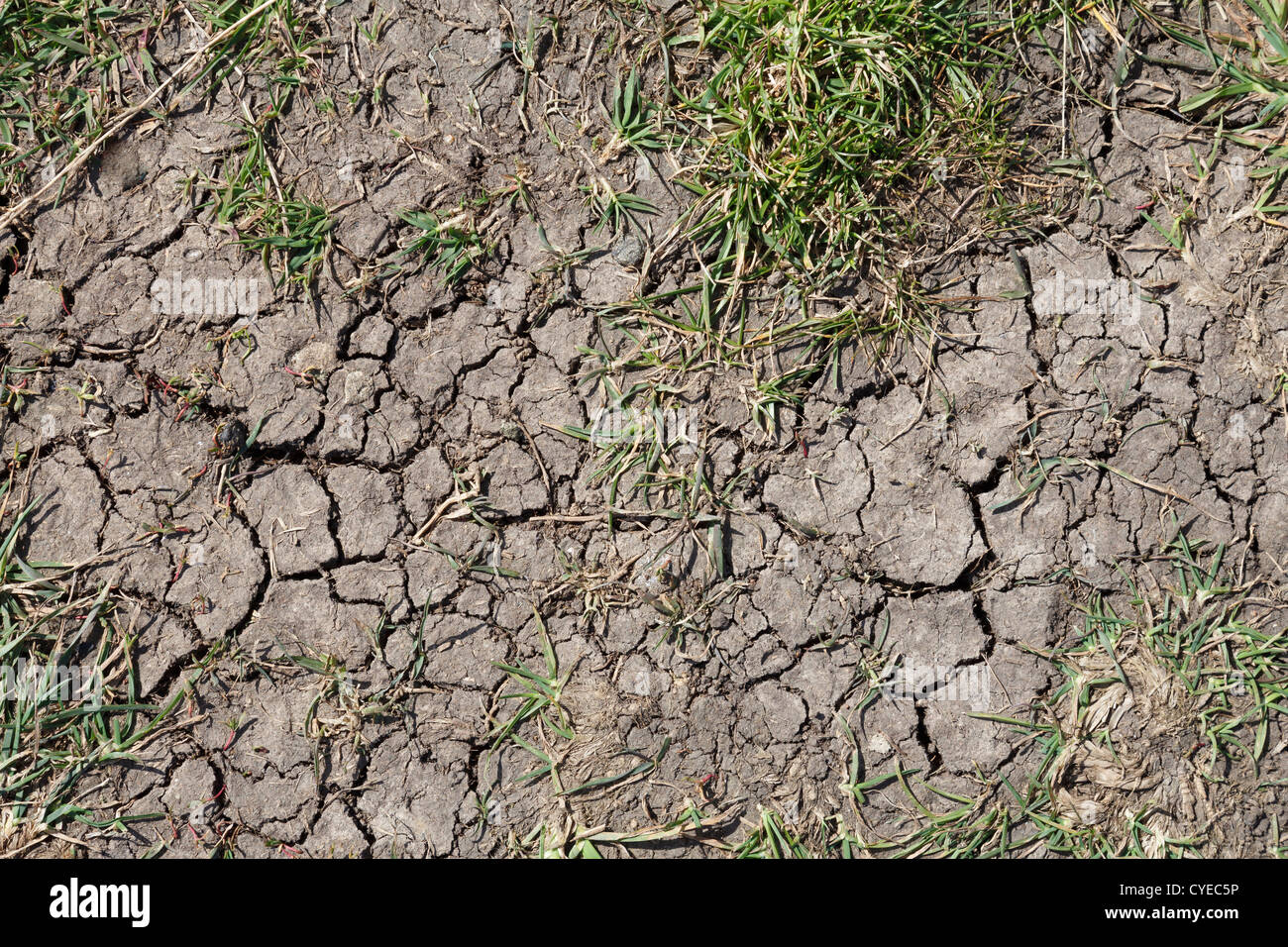 Infertile ground with cracks caused by dry weather - Stock Image