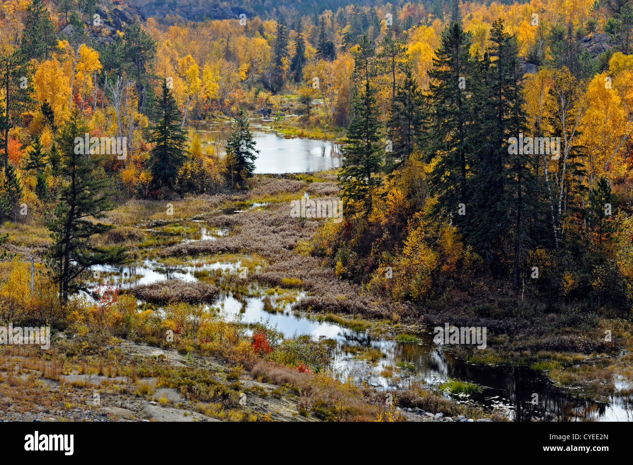 Aspens, birches and spruces along beaver pond channel, Greater Sudbury, Ontario, Canada - Stock Image