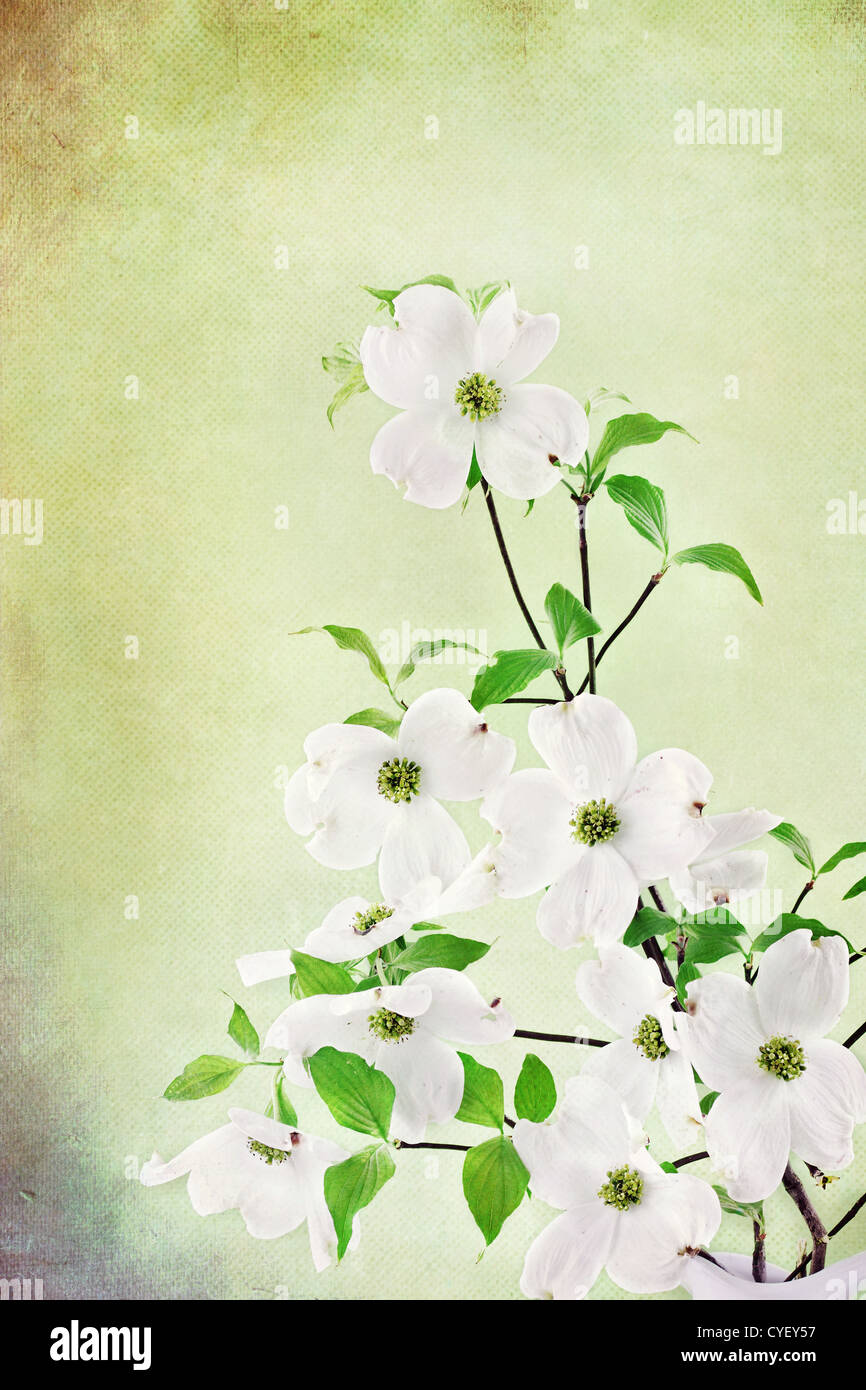 Outstanding Pickin Me A Bouquet Of Dogwood Flowers Image - Images ...