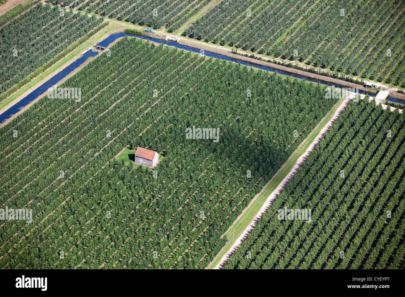 The Netherlands, Eck en Wiel. Cottage between apple fruit trees. Aerial. - Stock Image