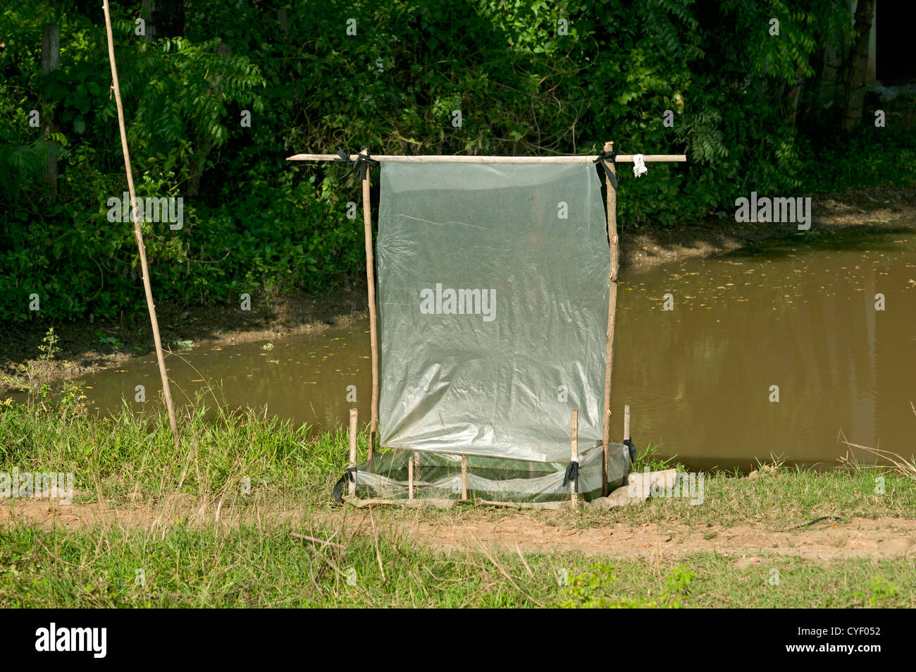 Plastic sheet as night trap for insects, which are eaten as a delicacy, Battambang, Cambodia - Stock Image