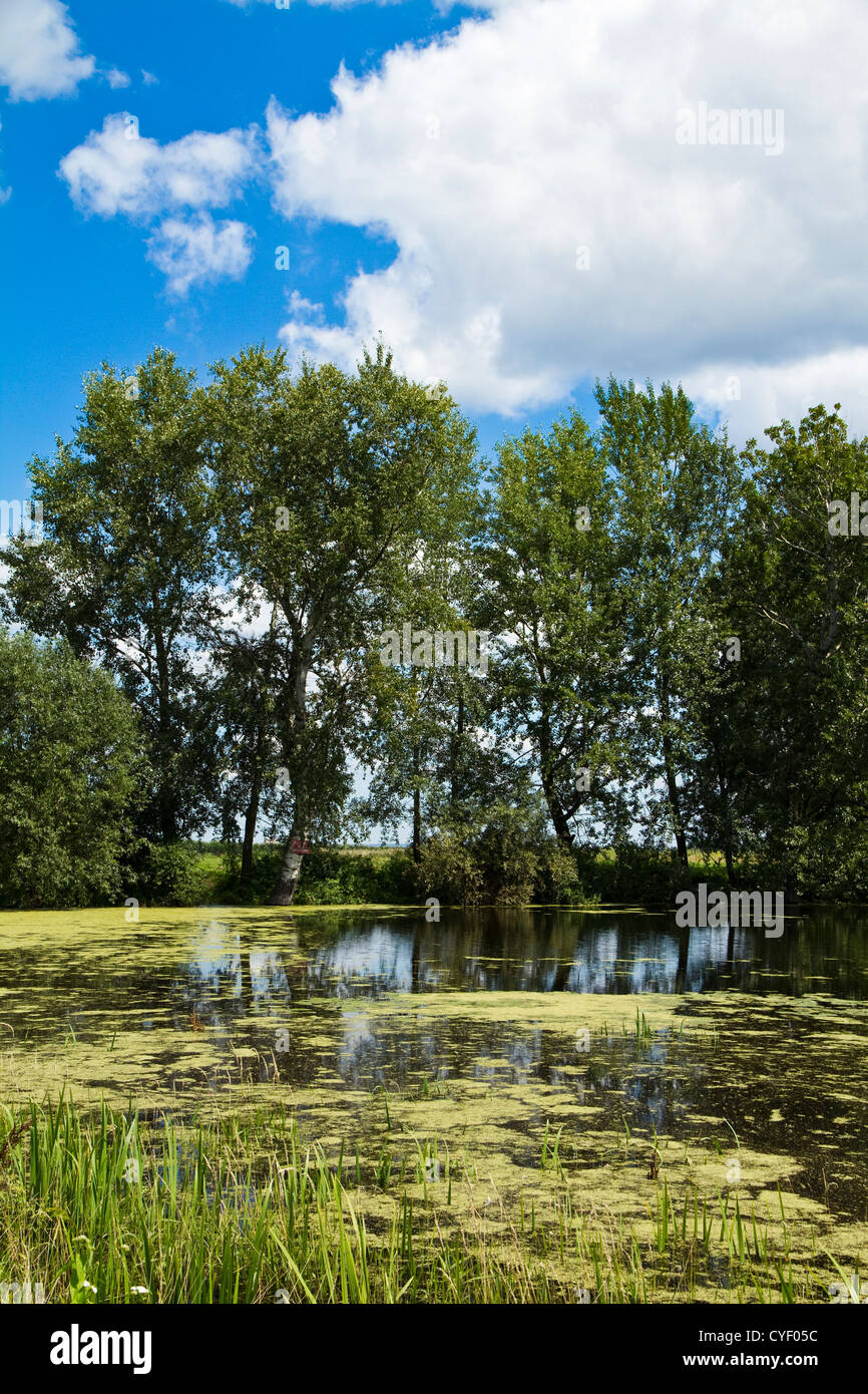 Trees and small lake in the park over claudy blue sky Stock Photo