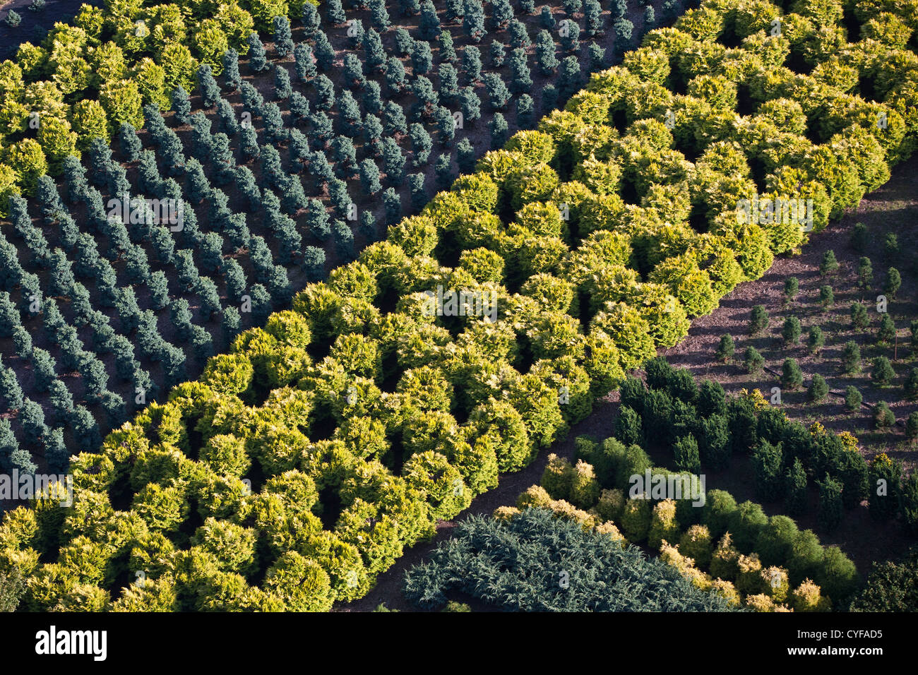 The Netherlands, Loosdrecht, Horticulture. Aerial. - Stock Image