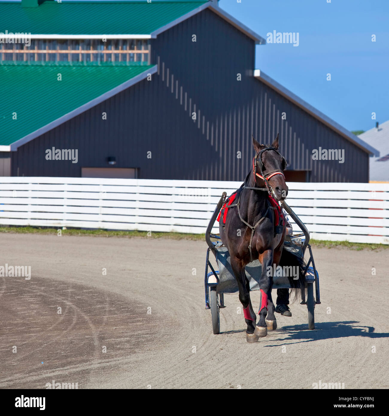 Horses in harness racing around the track. - Stock Image