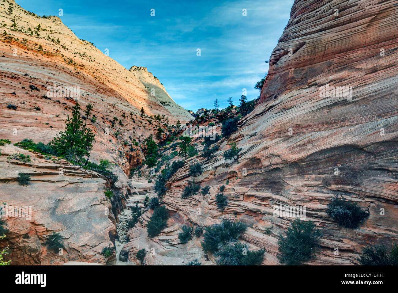 Zion National Park is located in the Southwestern United States, near Springdale, Utah - Stock Image