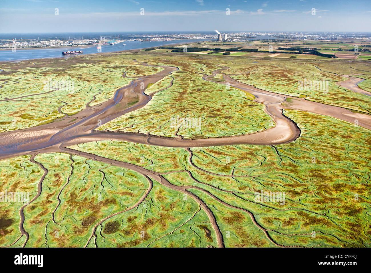 The Netherlands, Nieuw Namen, Westerschelde river. Background industrial area of Antwerp. Foreground tidal marshland. - Stock Image