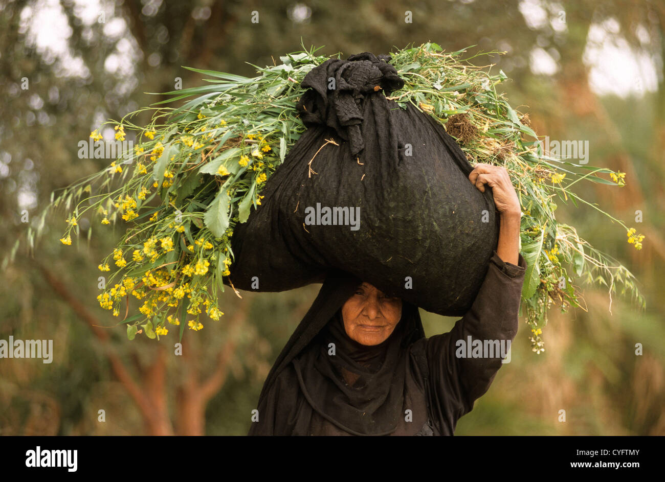 Egypt, Luxor, Nile river, West Bank, woman carrying fodder for cattle - Stock Image