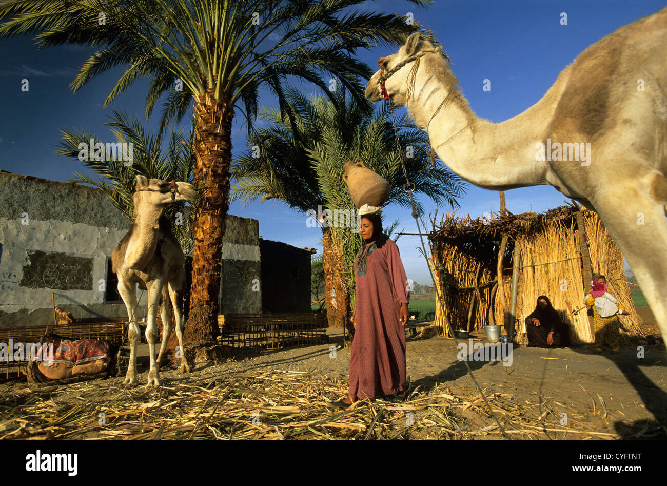 Egypt, Luxor, Nile river, West Bank, woman leaving home to get water with jar from Nile river. Camels - Stock Image