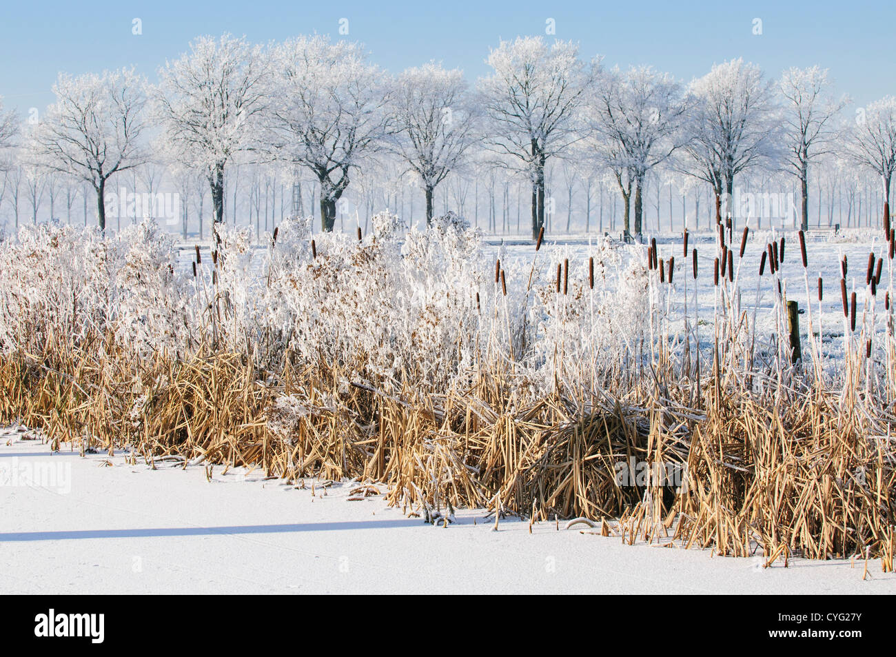 Winter landscape with snow and ice and vegetation on the bank of a canal with a row of trees in the background - Stock Image