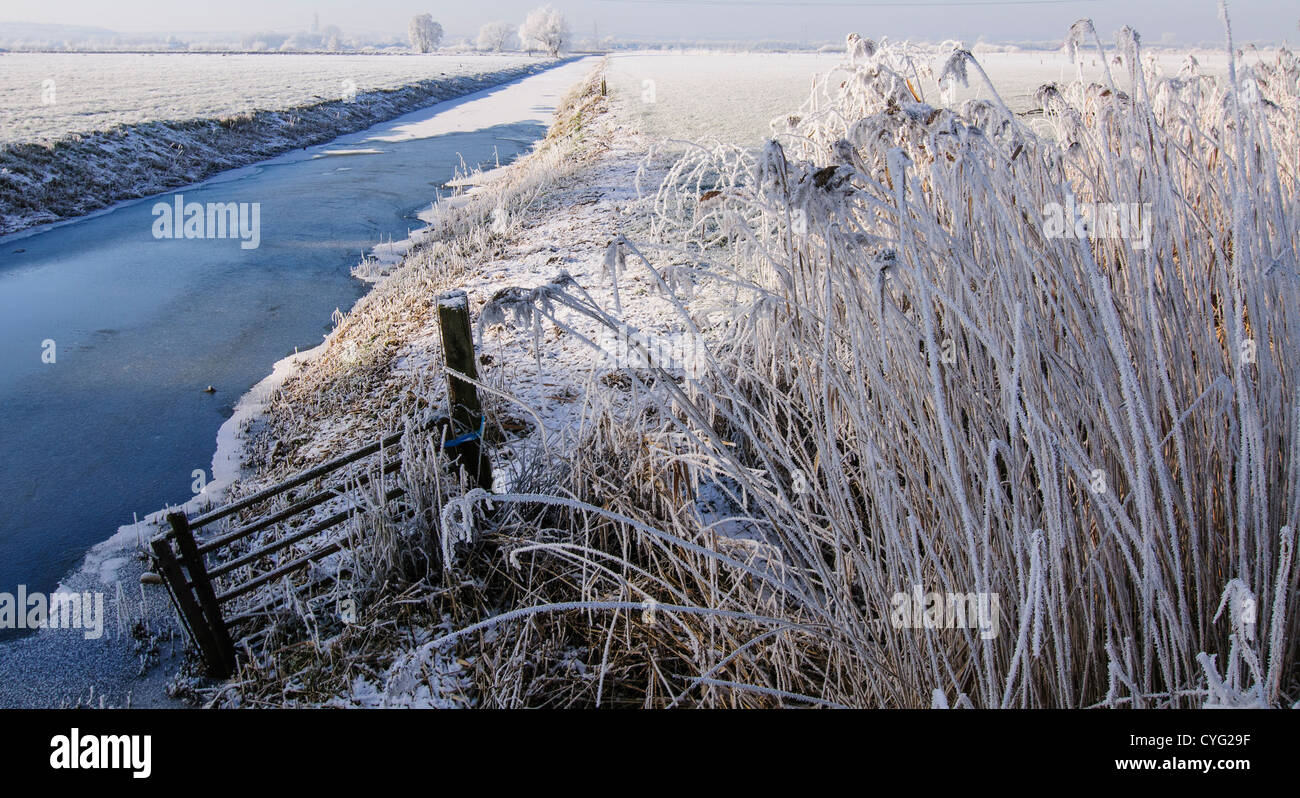 Winter landscape with reed covered in frost and a canal with ice - Stock Image