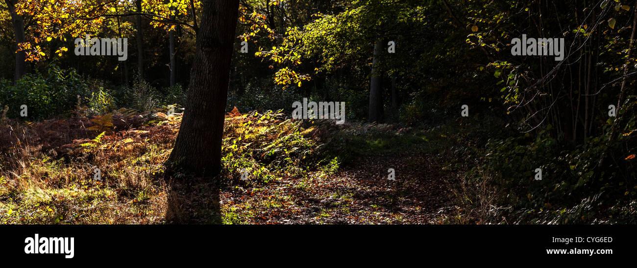 Woodland Light And Shade Stock Photo 51372789 Alamy