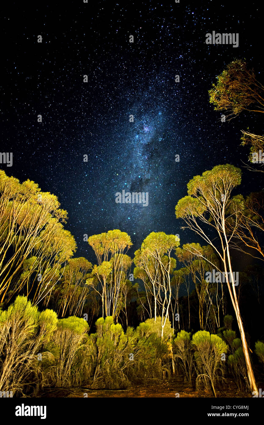 Stars and Milky Way over Mallee forest - Stock Image