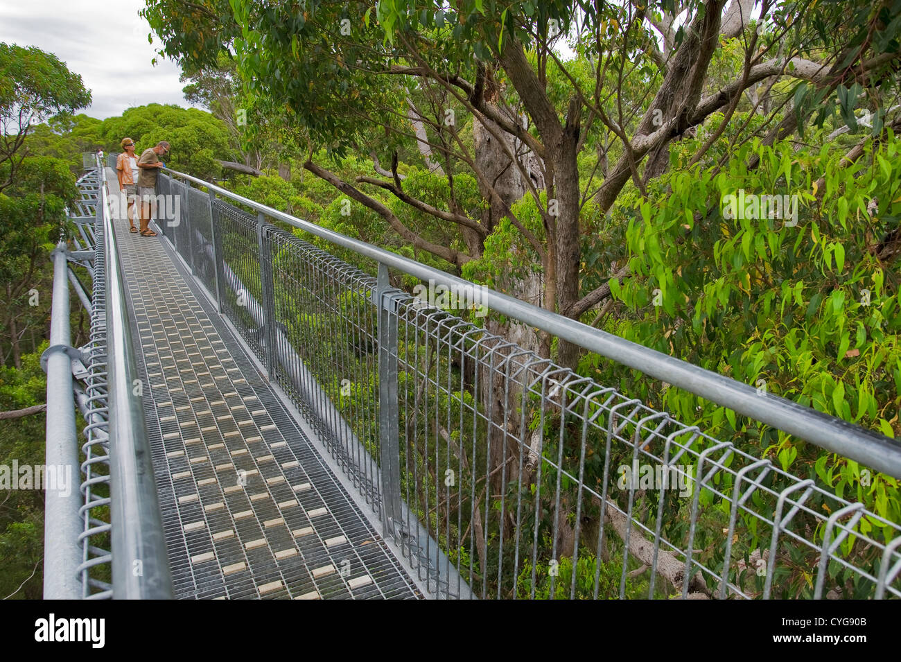 Famous Tree Top Walk in Walpole-Nornalup National Park. - Stock Image