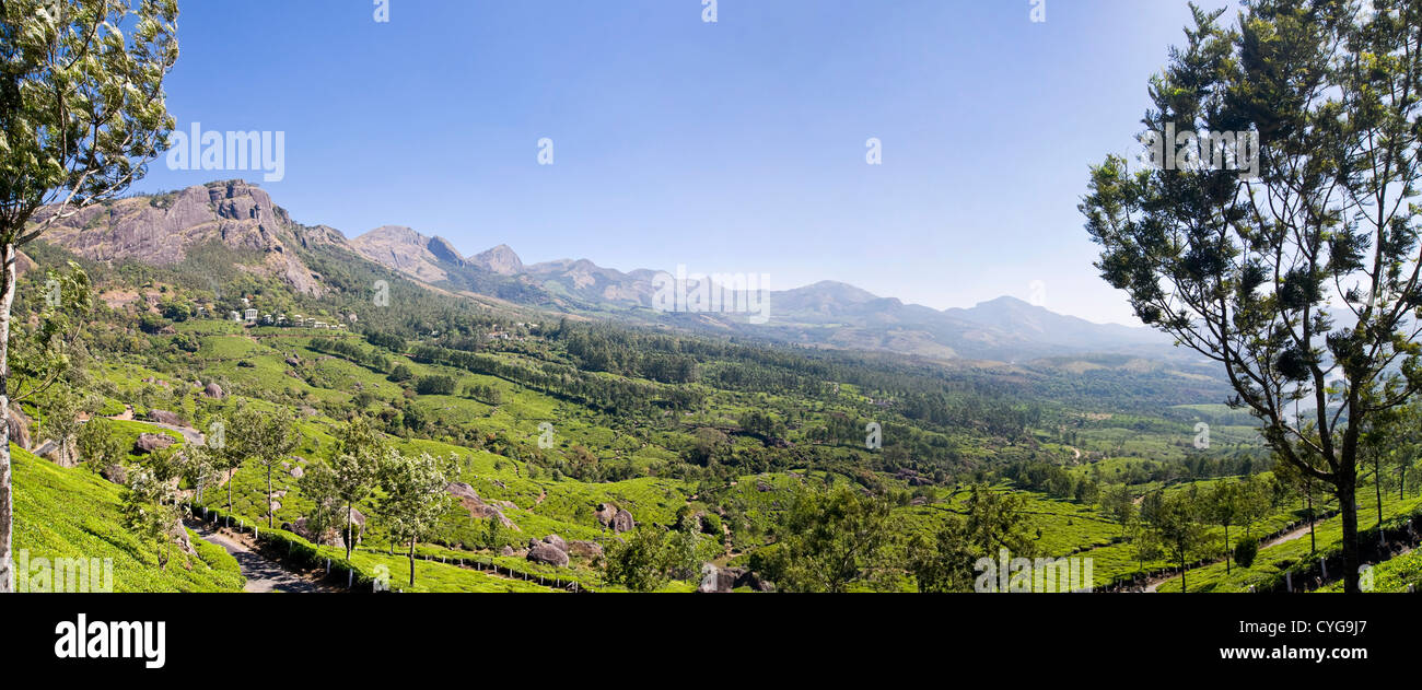 Horizontal panoramic (2 picture stitch) view of the stunning tea plantation landscape in the mountains of Idukki - Stock Image