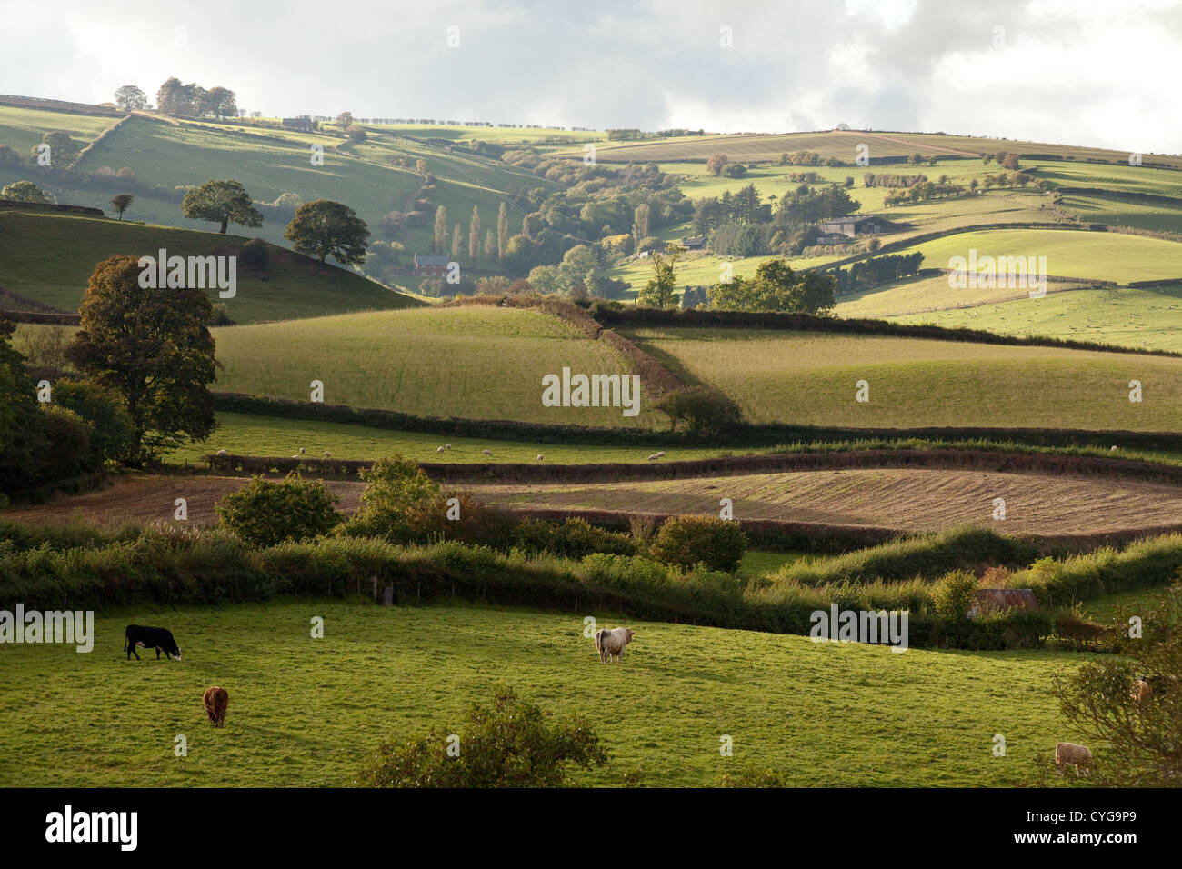 The England countryside in South Shropshire near Clun, Britain UK - Stock Image