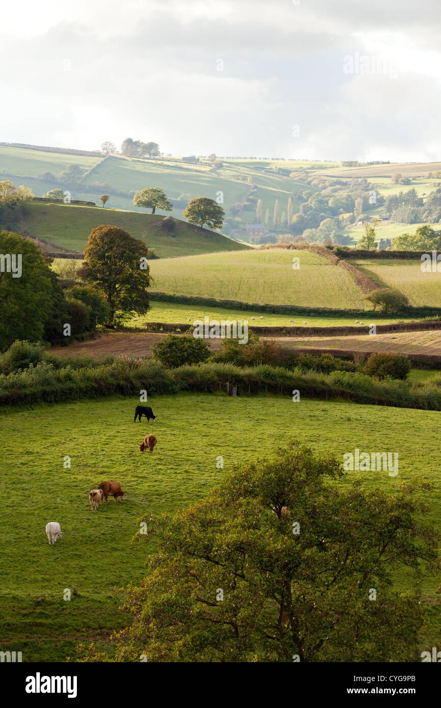Shropshire hills countryside near Clun, South Shropshire England UK - Stock Image