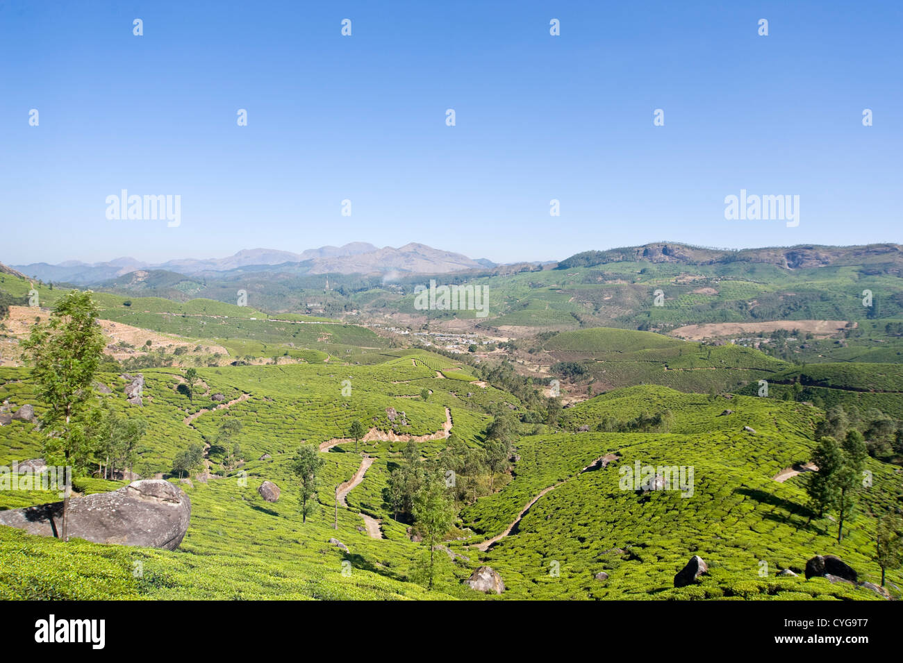 Horizontal view of the stunning tea plantation landscape in the high ranges of Idukki District, India - Stock Image