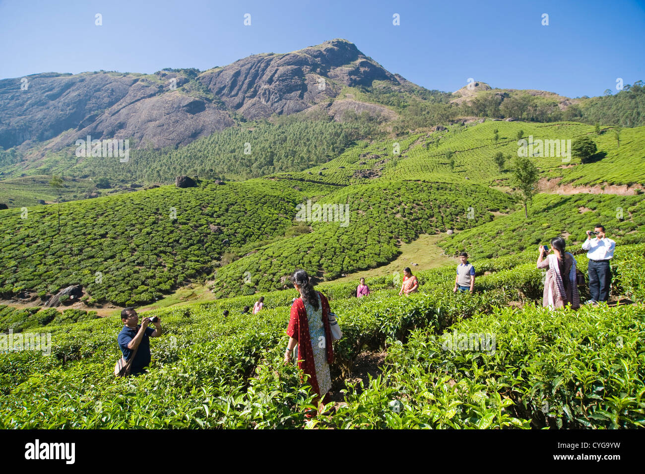 Horizontal view of Indian tourists admiring the stunning tea plantation scenery in the high ranges of Idukki District, - Stock Image
