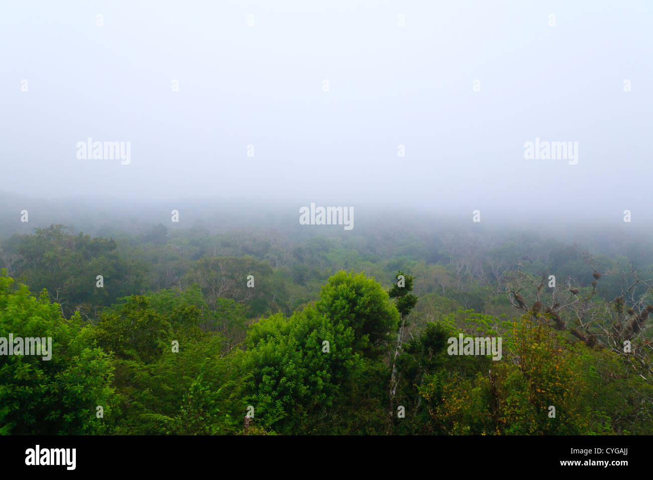 Aerial view of Tikal National Park at dawn in Guatemala - Stock Image