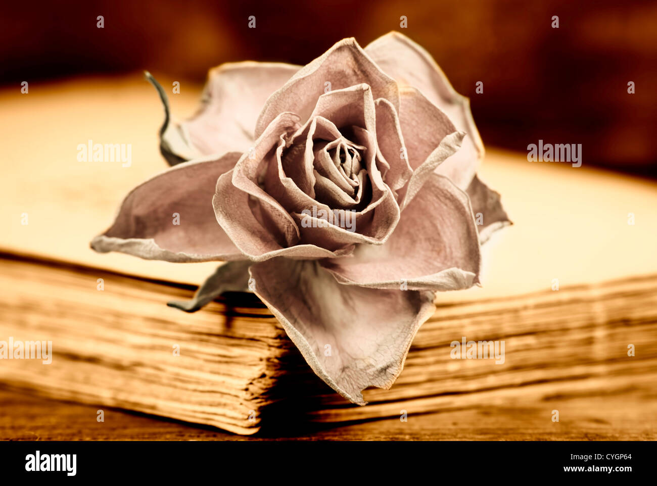 a faded rose on an old book - Stock Image