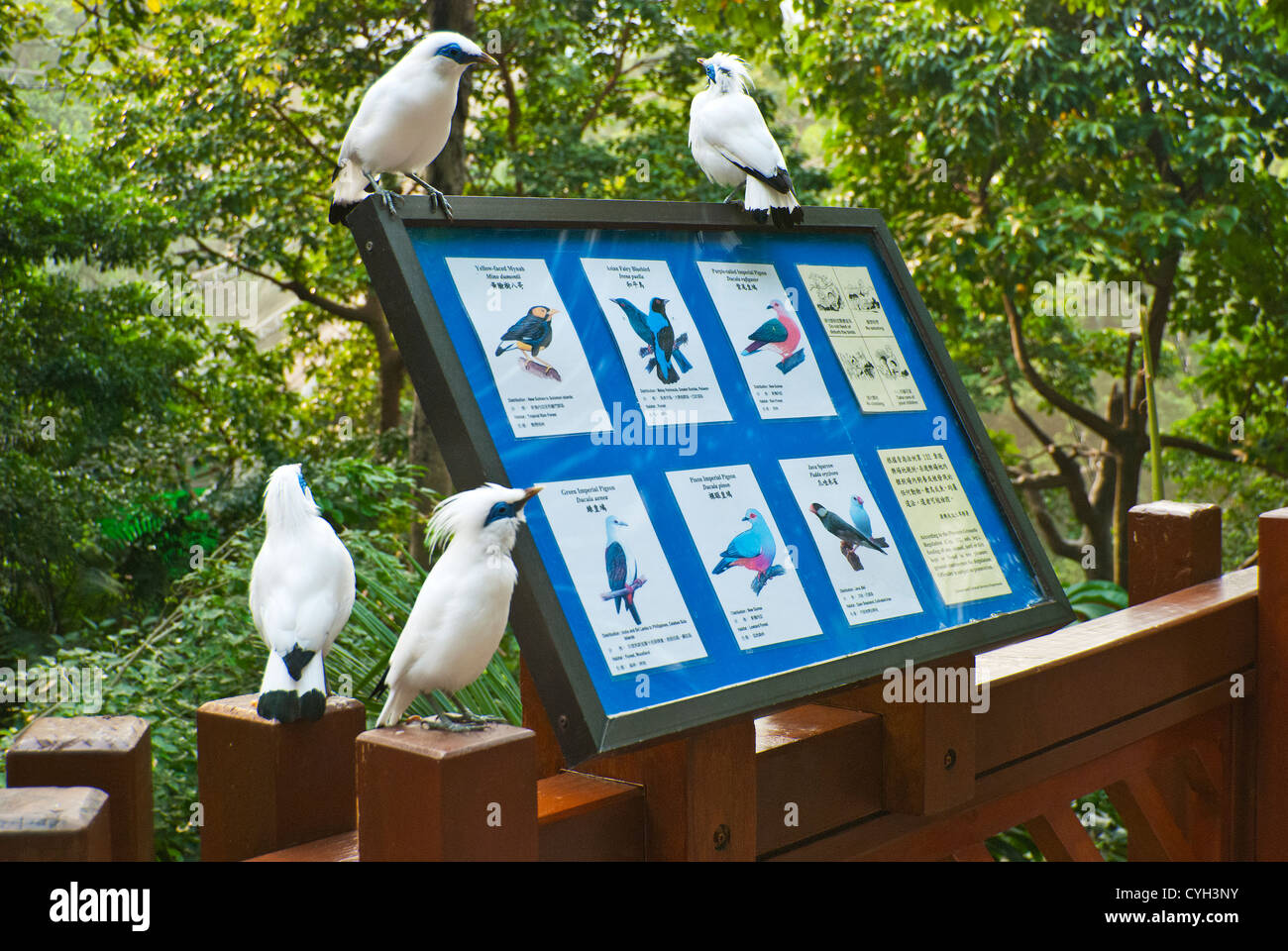Interior of the Edward Youde Aviary, Hong Kong Park, including species identification sign and Bali starlings - Stock Image