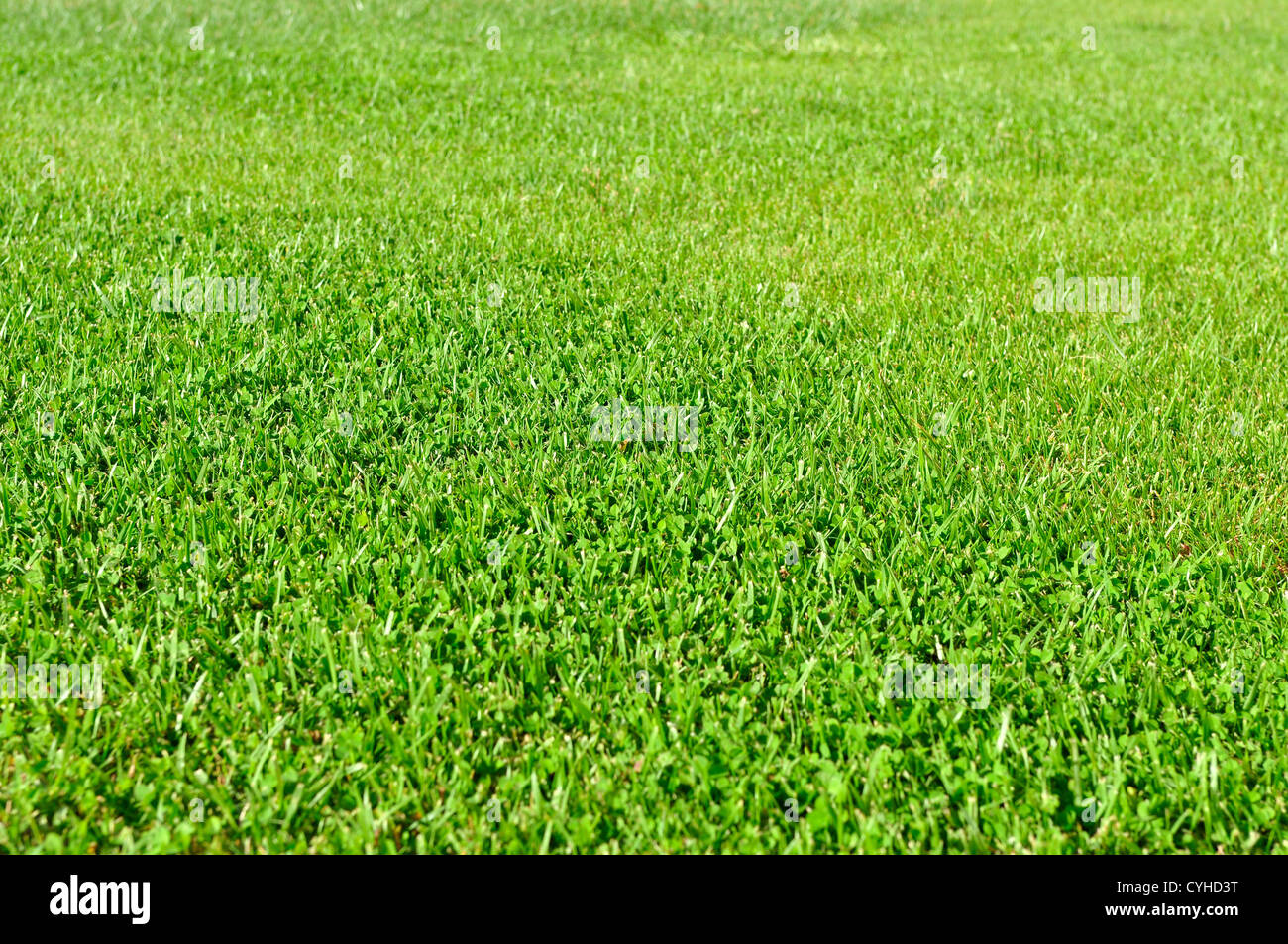 A fresh natural grass field, low depth of field, focus on the middle of the frame - Stock Image