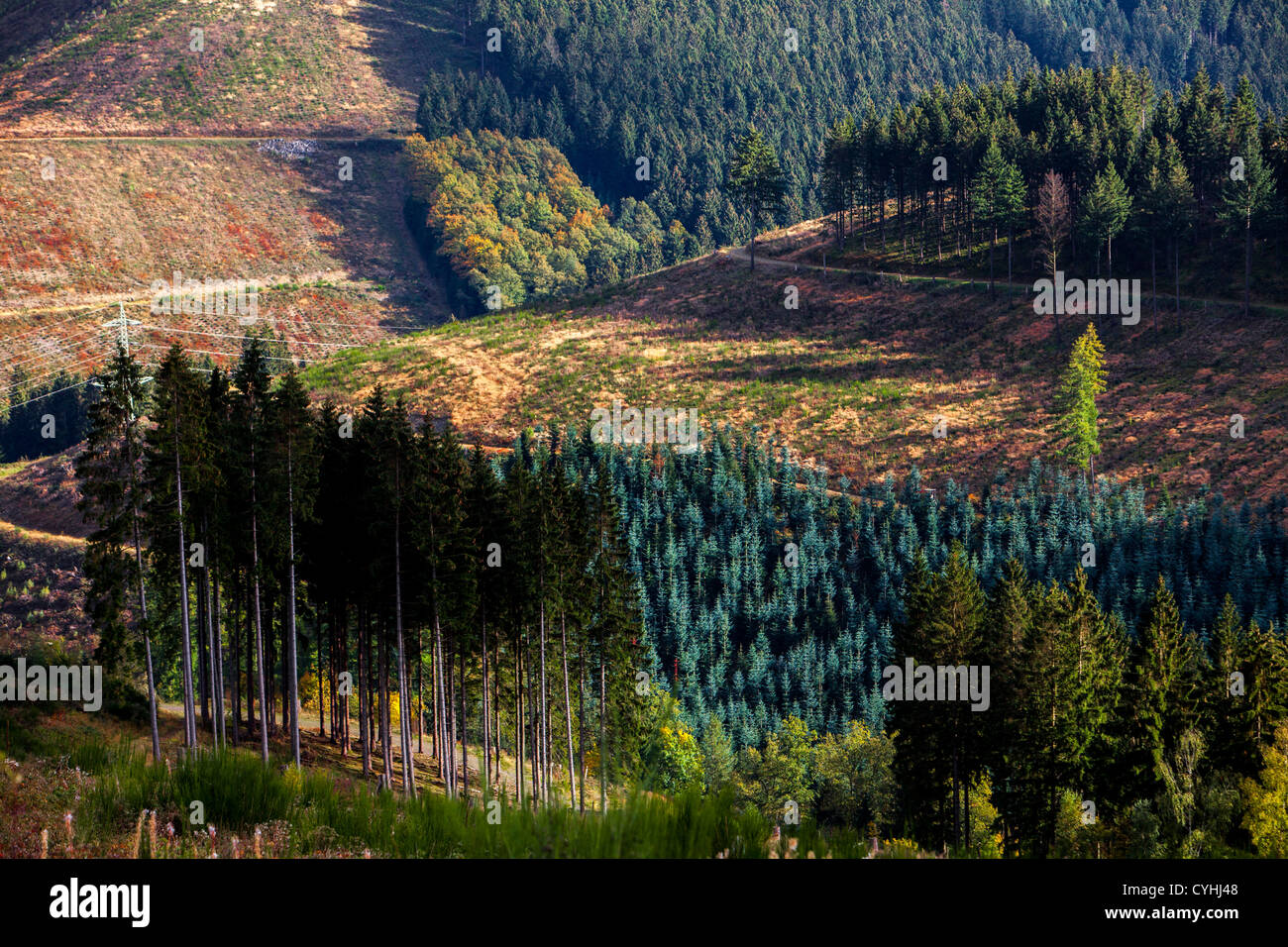 Forest, trees in fall, autumn. Sauerland, a north western region in Germany, Europe. Stock Photo