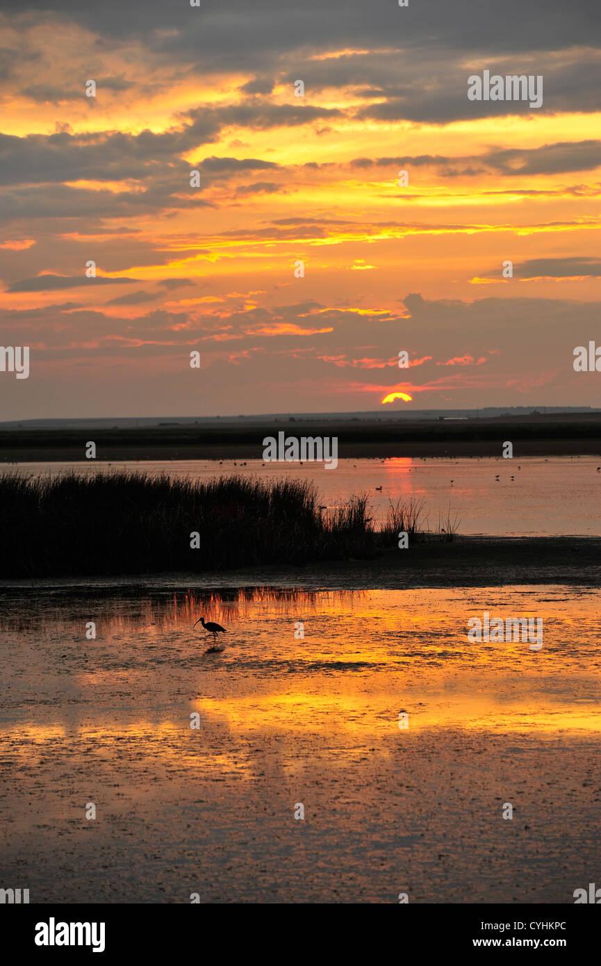 Glowing Sunset - Stock Image