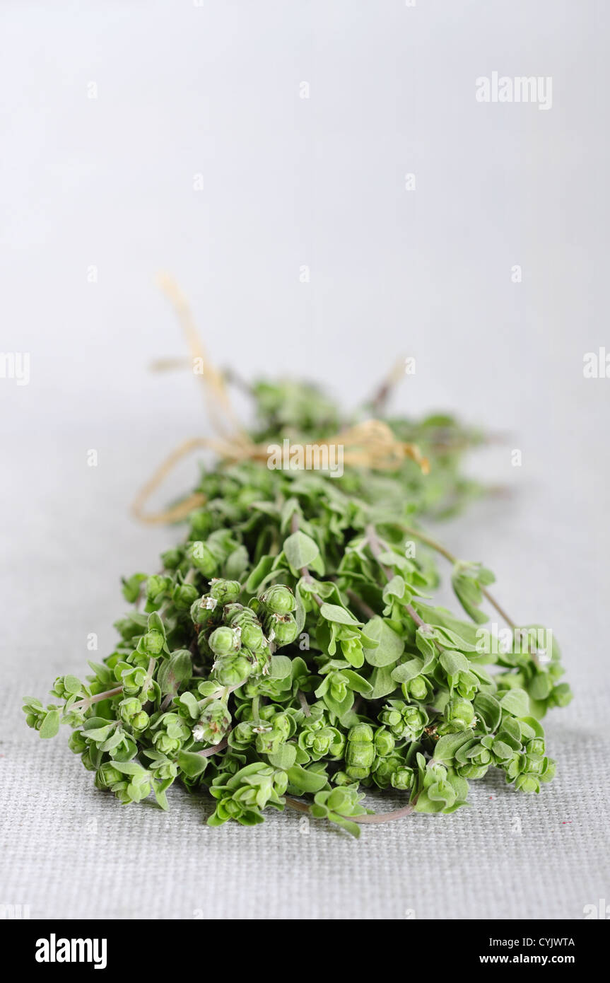 Bunch of blooming marjoram herb closeup on beige tablecloth. Small shallow DOF. - Stock Image