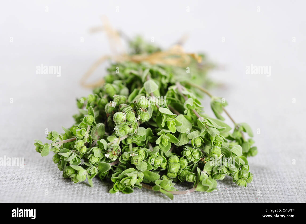 Bunch of blooming marjoram herb closeup on beige tablecloth - Stock Image