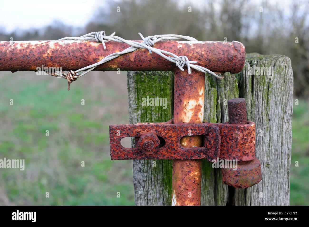 Barbed wire on a rusty gate Stock Photo: 51445102 - Alamy