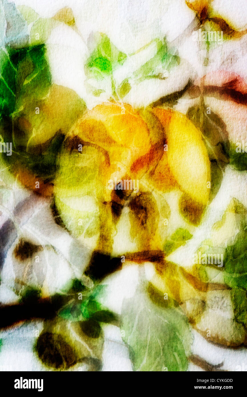 Leaves and apples A photographic blend of images from a watercolour - Stock Image