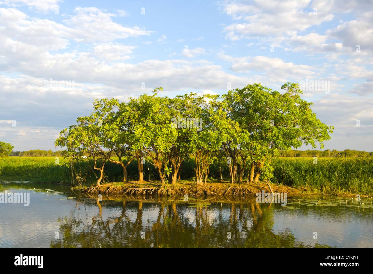 Yellow Water Billabong, Kakadu National Park, Northern Territory, NT, Australia - Stock Image