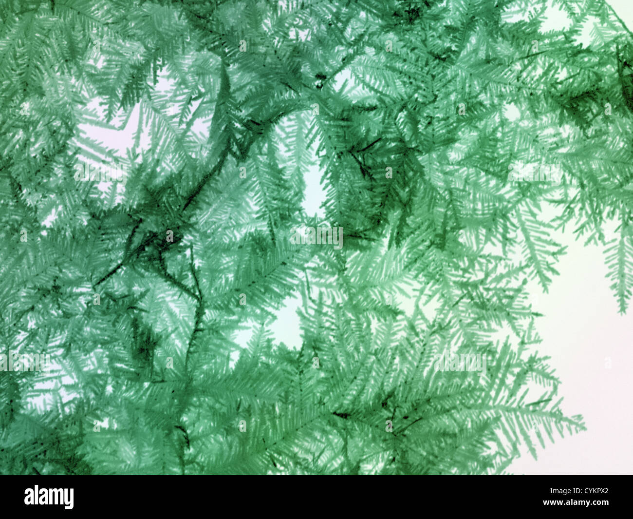 SEM of chemically deposited Silver on metallic substrates Stock Photo