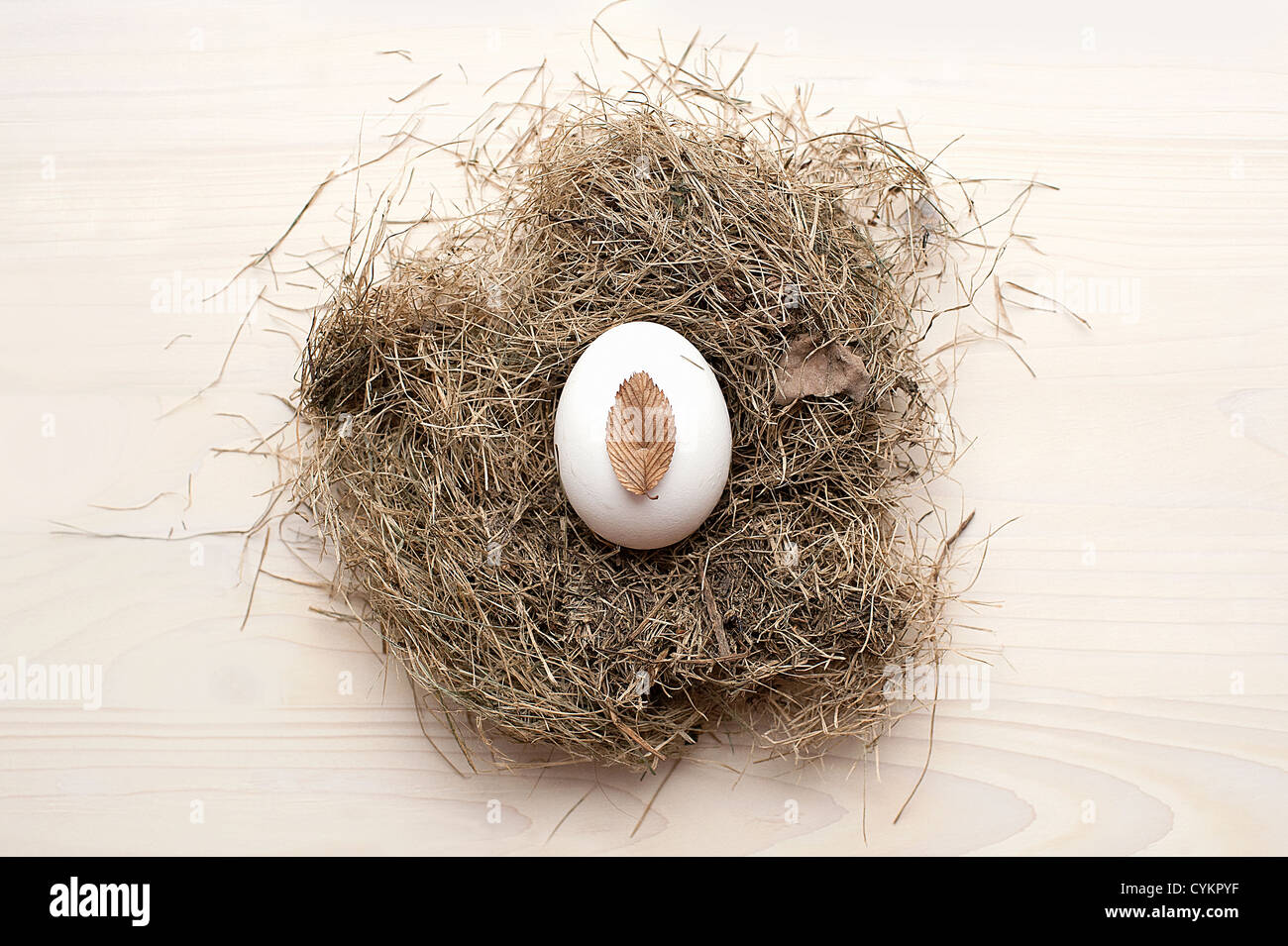 Close up of egg in birds nest - Stock Image