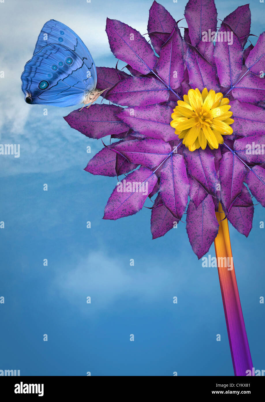 Close up of butterfly landing on flower - Stock Image