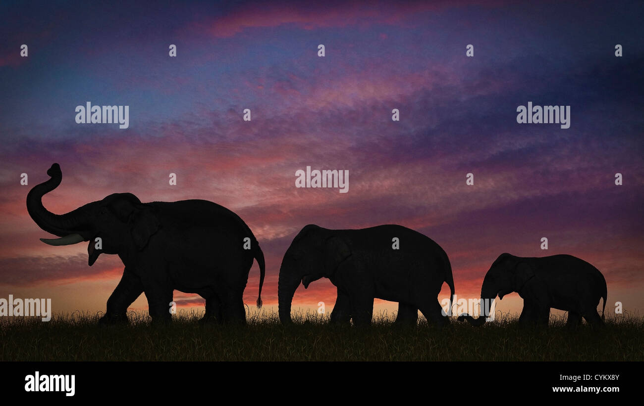 Silhouette of elephants against sky - Stock Image