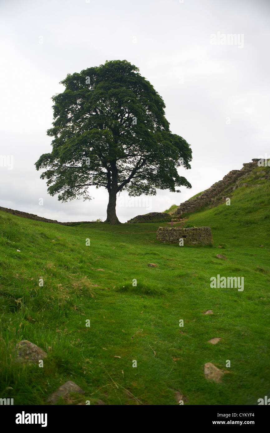 Stone well in rural field - Stock Image