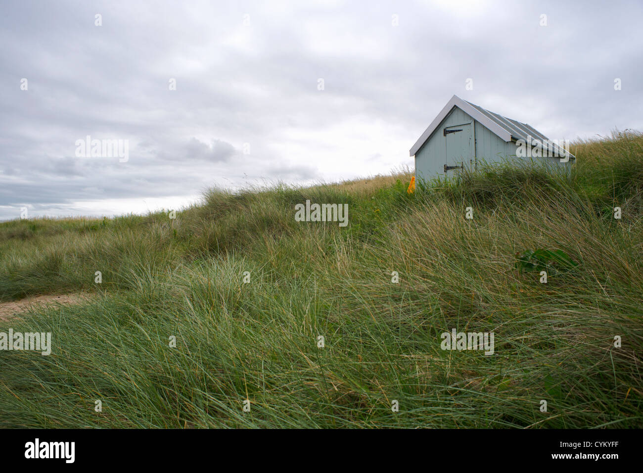 Beach grass blowing in wind - Stock Image