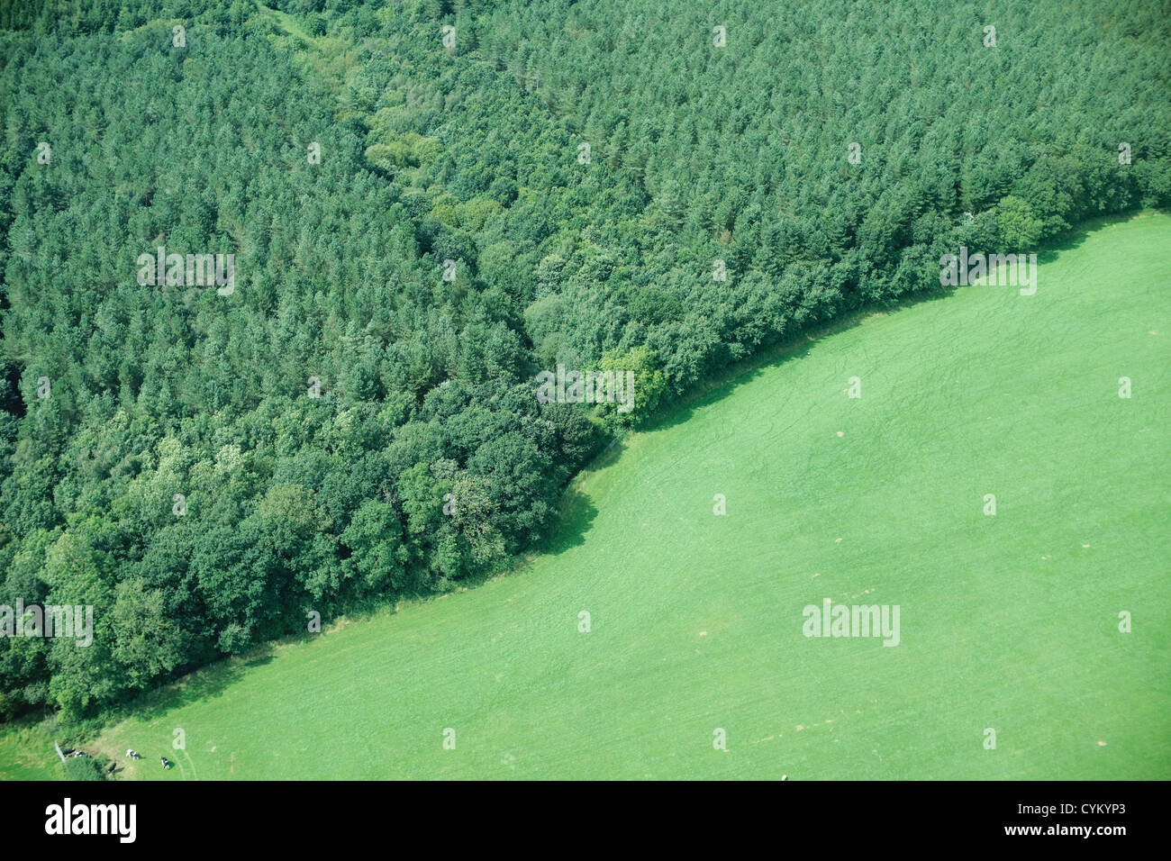 Aerial view of forest and rural field - Stock Image