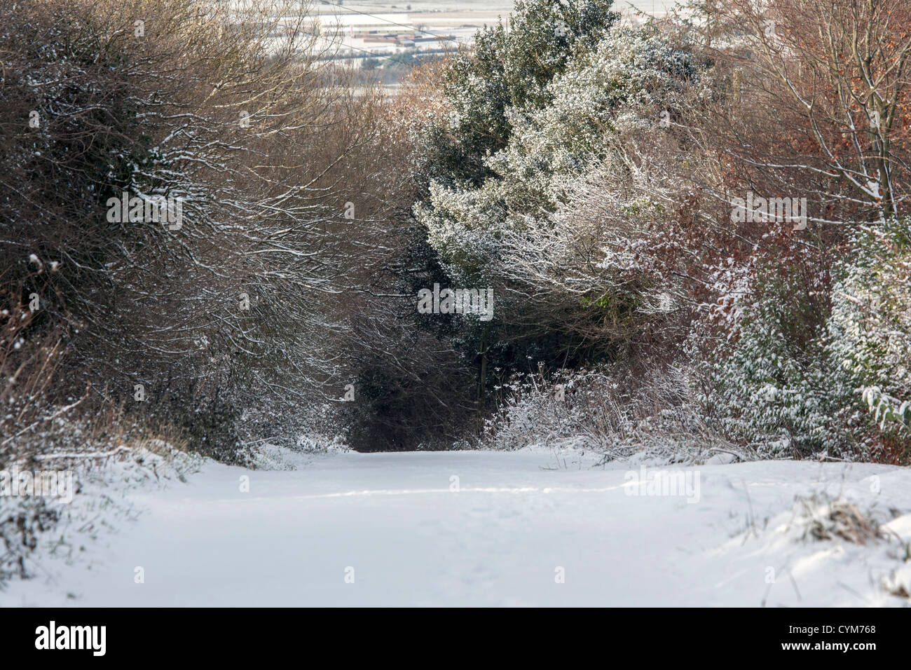A snow covered lane with trees and hedgerows in winter - Stock Image