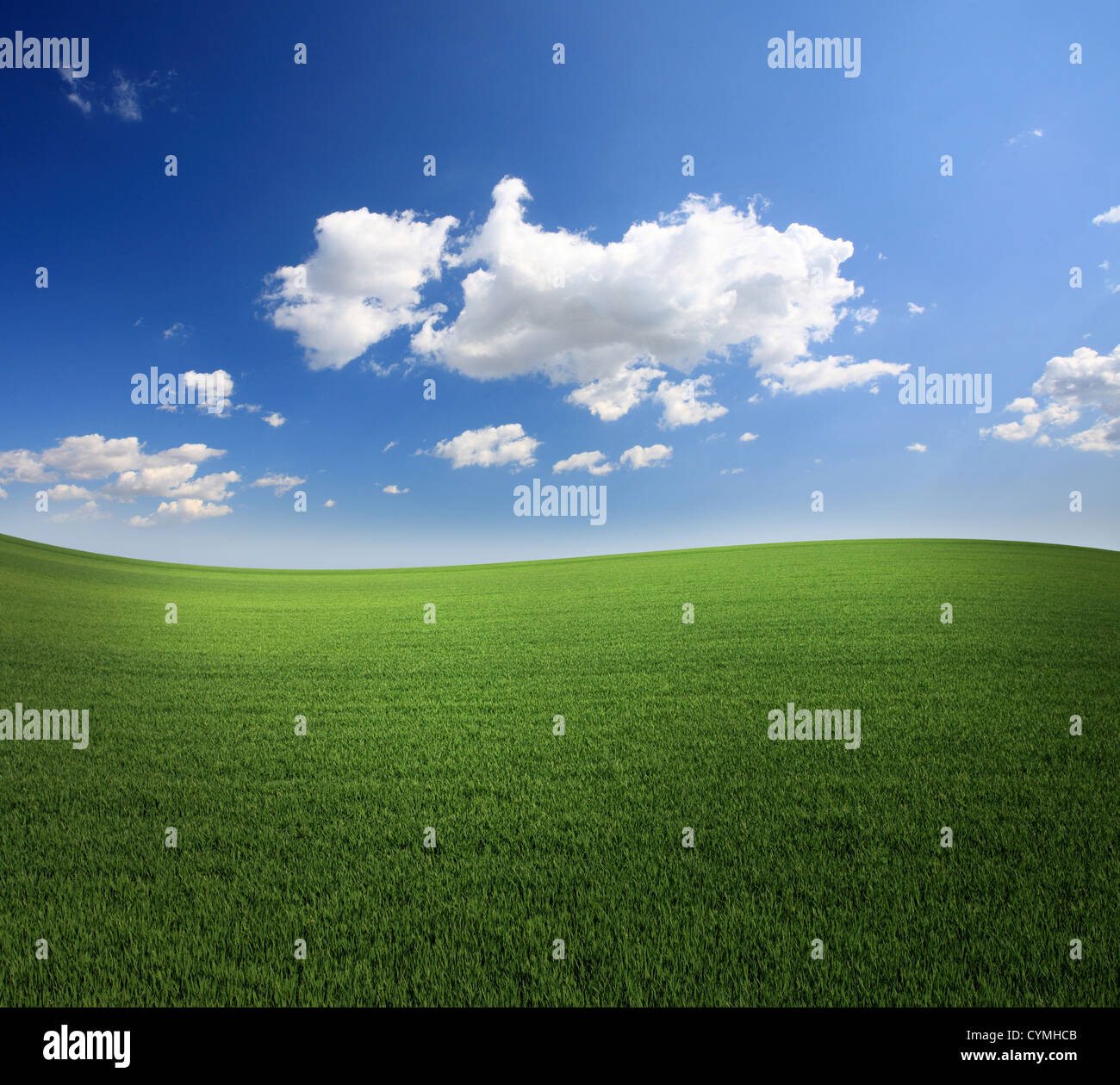 Lush green grass and a cool blue sky - Stock Image