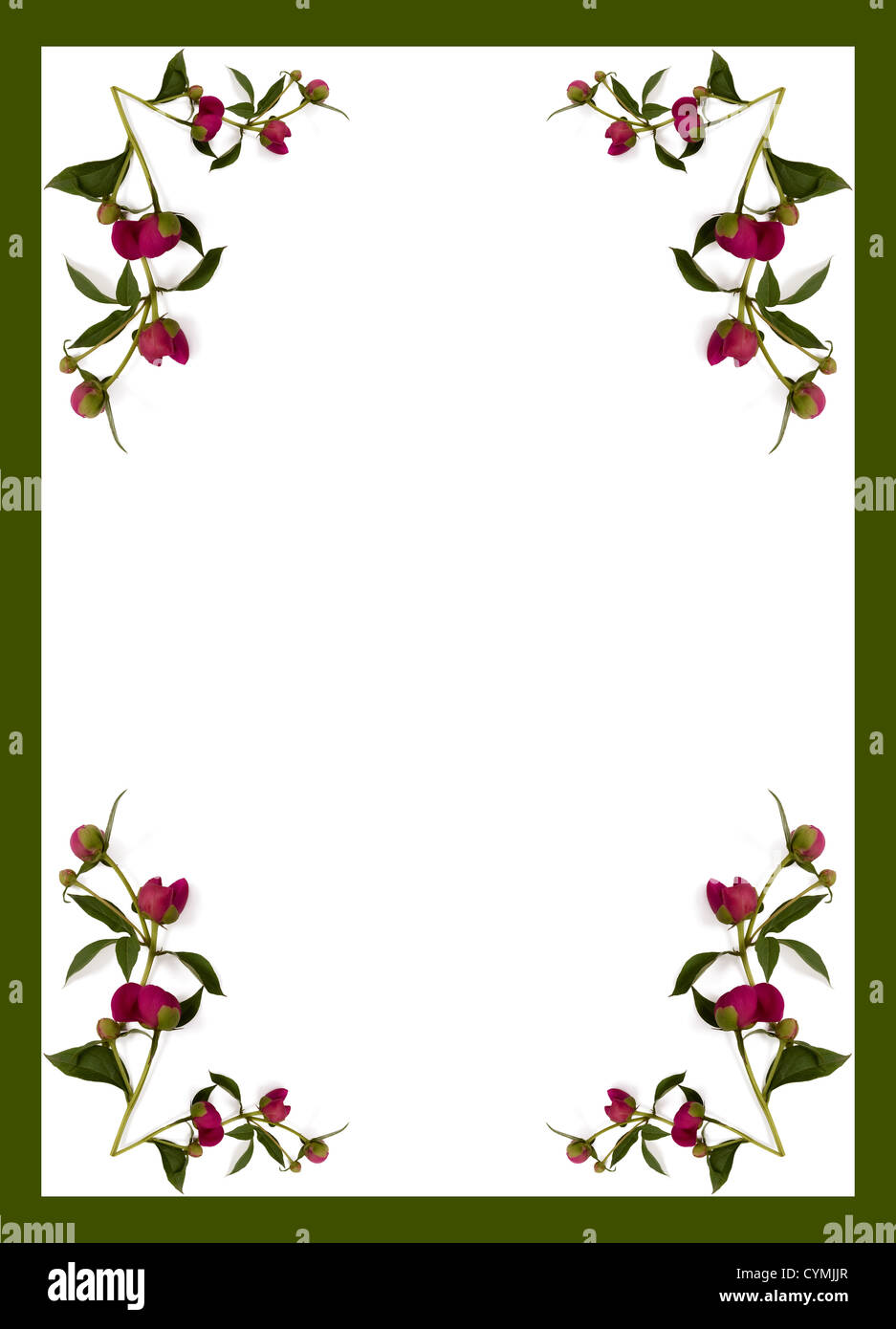 Paeonia red buds arrangement on white print - Stock Image