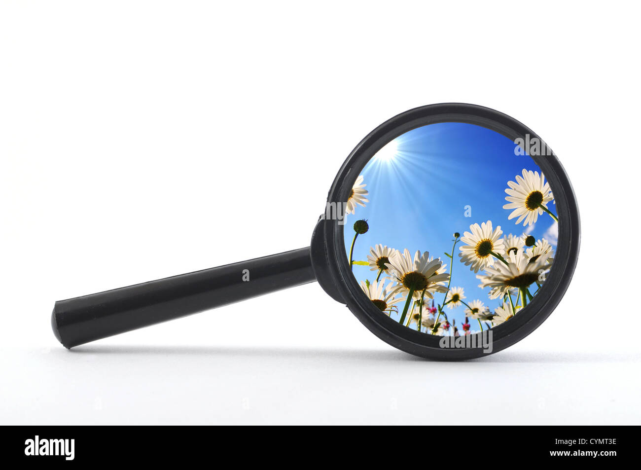 finde a flower or nature with a magnifying glass - Stock Image