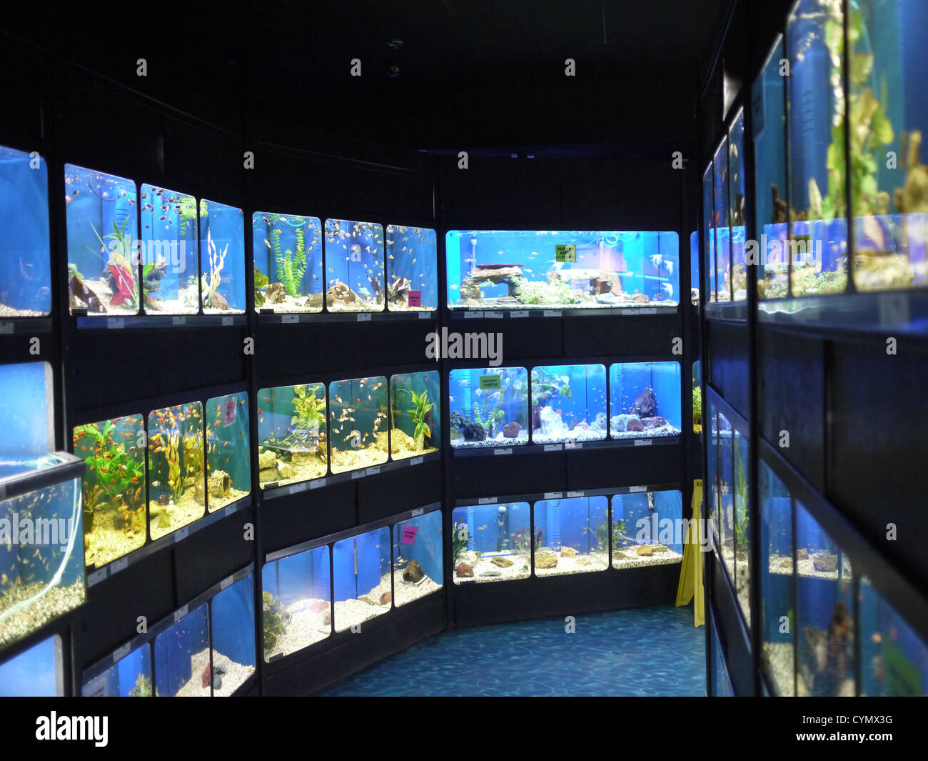 Fish tanks pet store stock photo 51475972 alamy for Fish and pet store