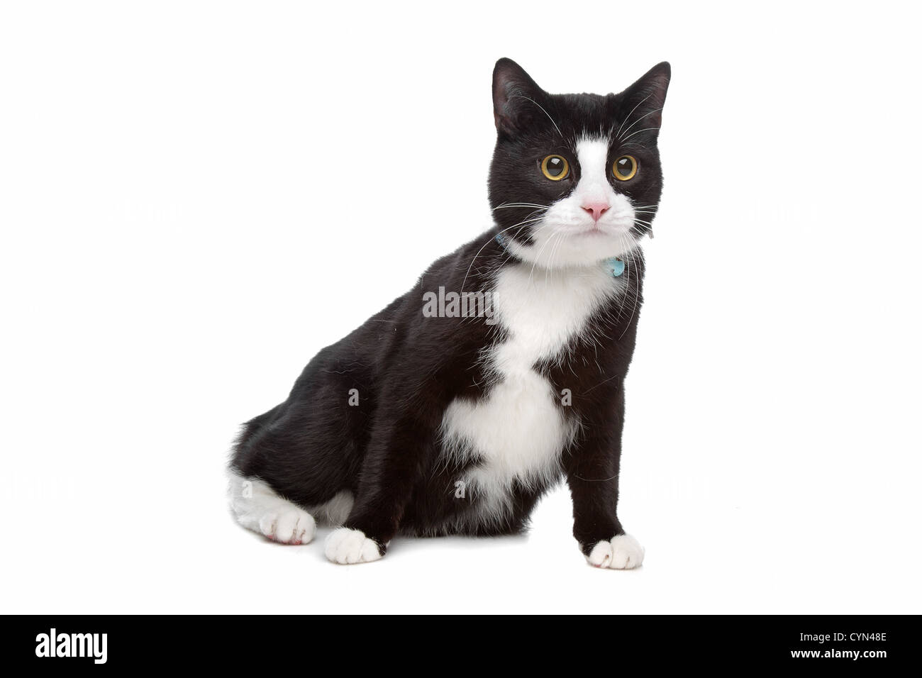black and white cat in front of a white background Stock Photo ...