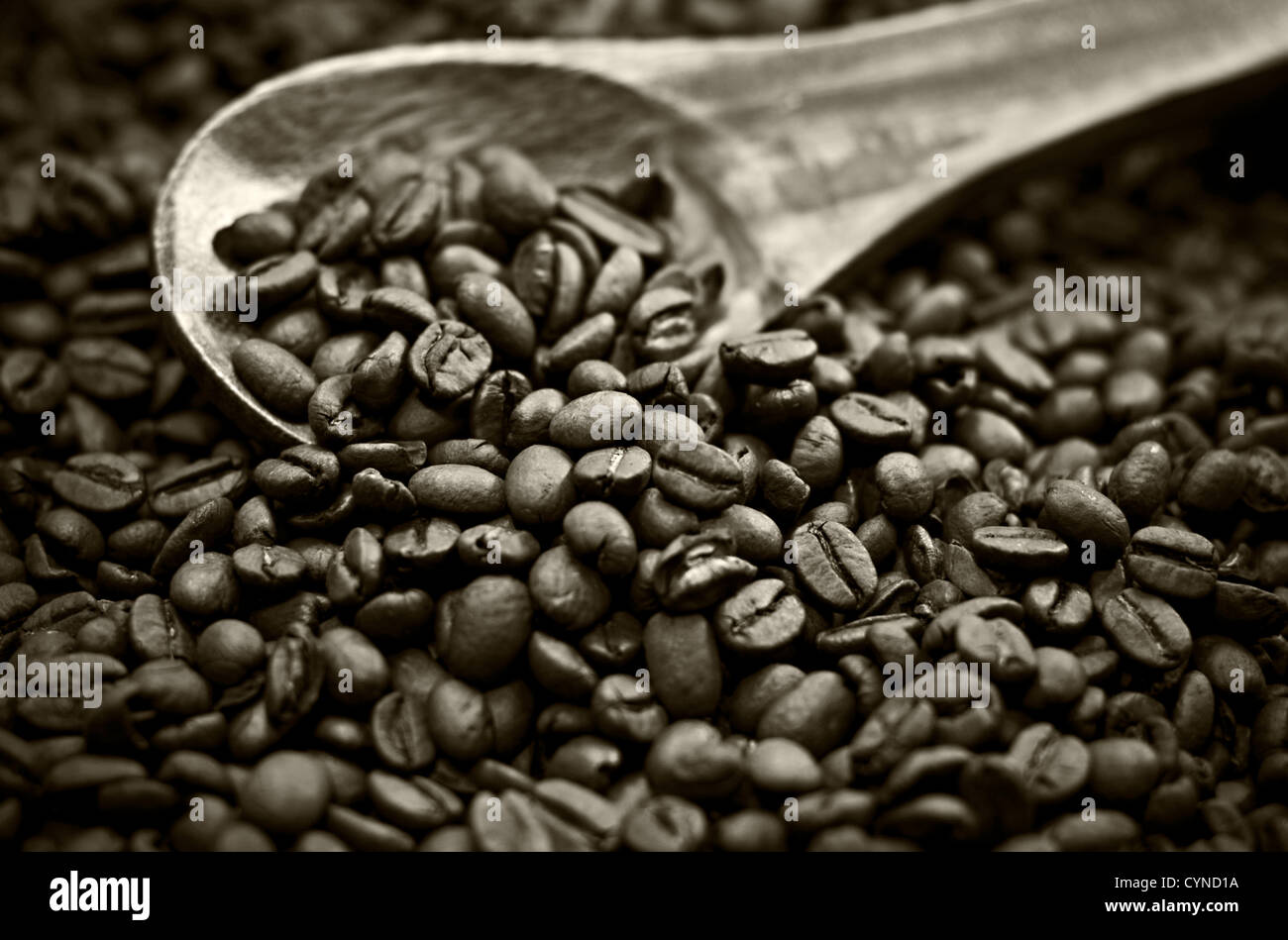 Full frame of coffee beans in sepia tones. - Stock Image