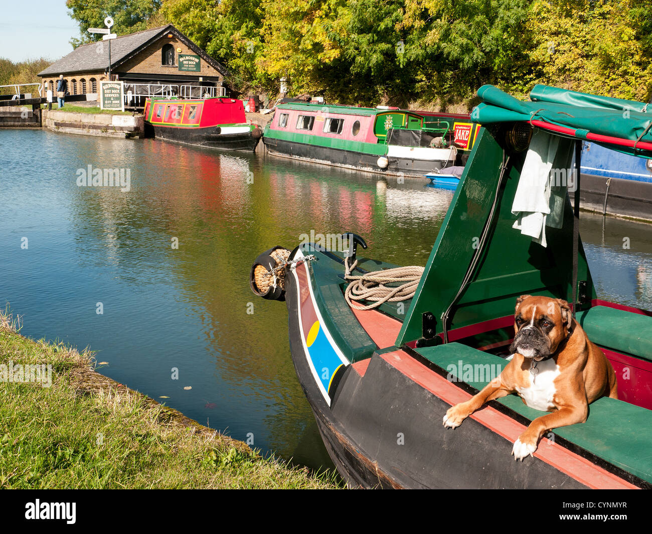 Narrow boats at Bulbourne dry dock and DIY hire on the Grand Union Canal at Marsworth, Bucks UK with a brown and - Stock Image