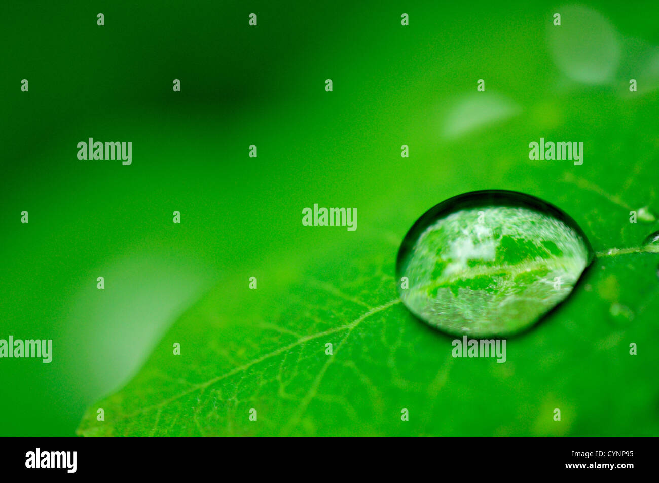 Close-up of a water droplet on a leaf. - Stock Image